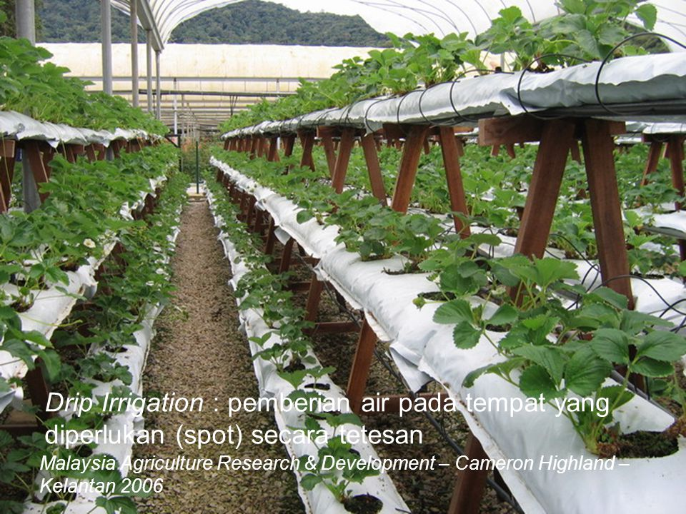Drip Irrigation : pemberian air pada tempat yang diperlukan (spot) secara tetesan