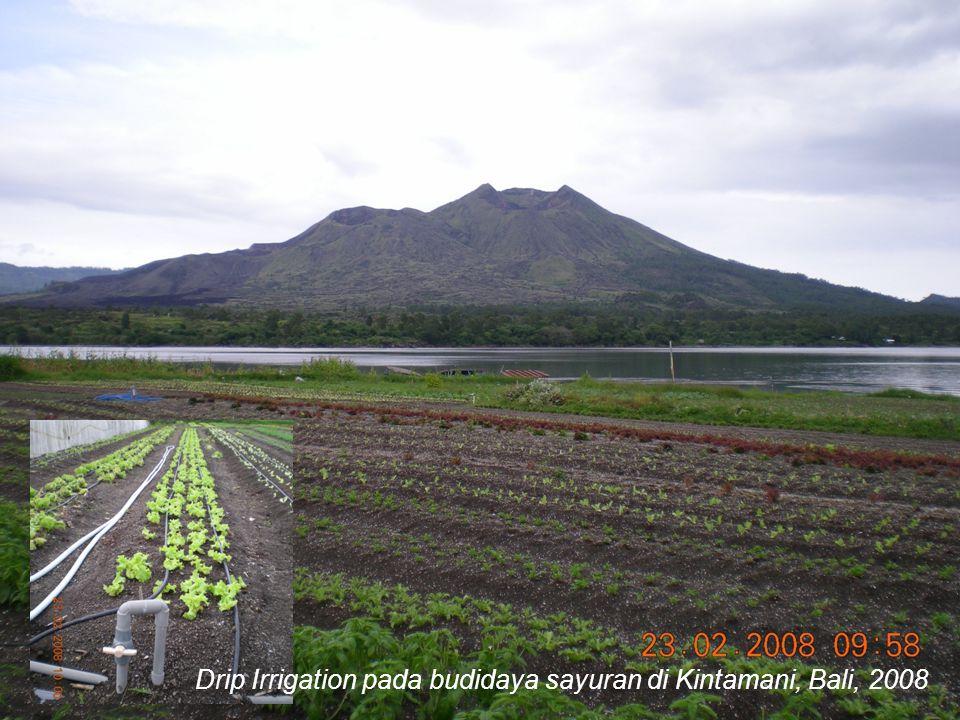 Drip Irrigation pada budidaya sayuran di Kintamani, Bali, 2008