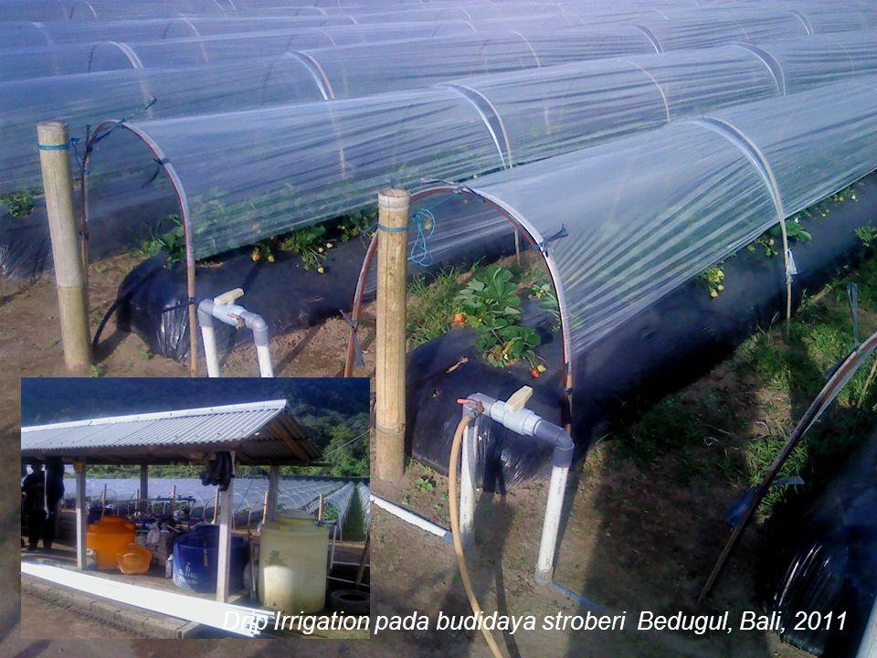Drip Irrigation pada budidaya stroberi Bedugul, Bali, 2011