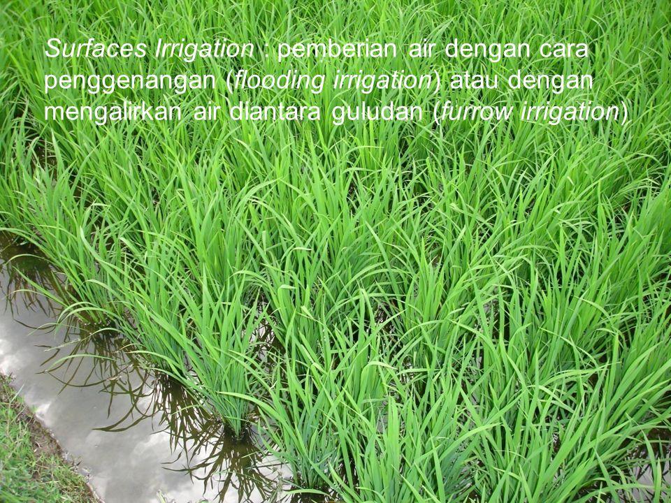 Surfaces Irrigation : pemberian air dengan cara penggenangan (flooding irrigation) atau dengan mengalirkan air diantara guludan (furrow irrigation)