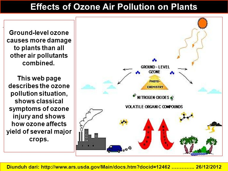 Effects of Ozone Air Pollution on Plants