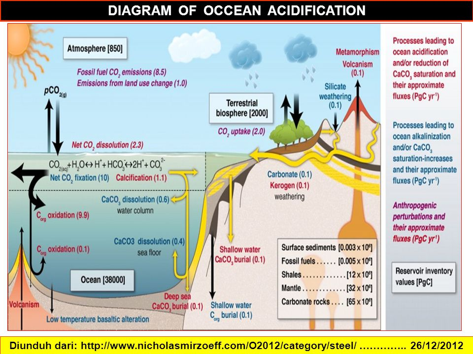 DIAGRAM OF OCCEAN ACIDIFICATION