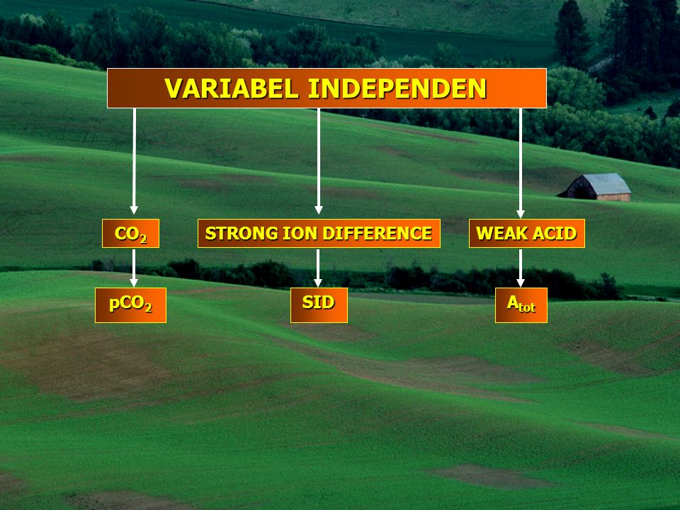 VARIABEL INDEPENDEN CO2 STRONG ION DIFFERENCE WEAK ACID pCO2 SID Atot