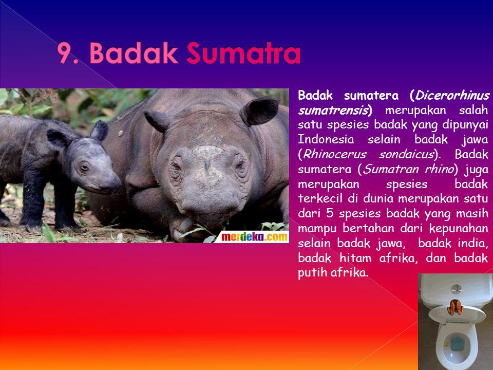 9. Badak Sumatra