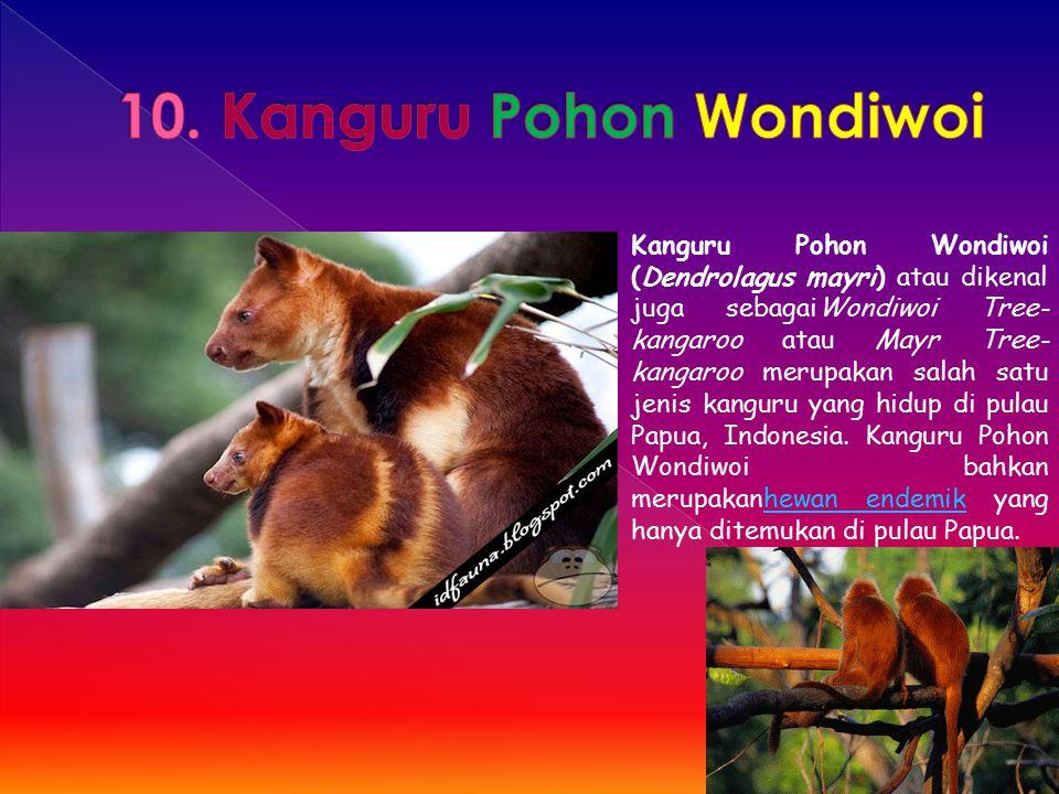 10. Kanguru Pohon Wondiwoi
