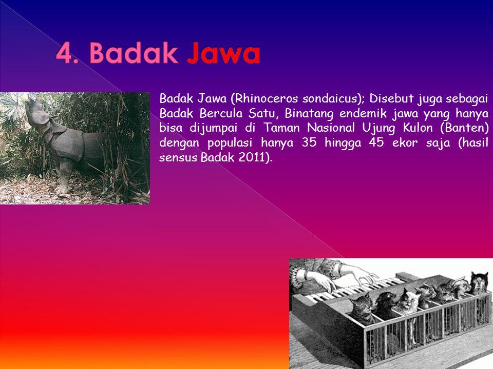 4. Badak Jawa