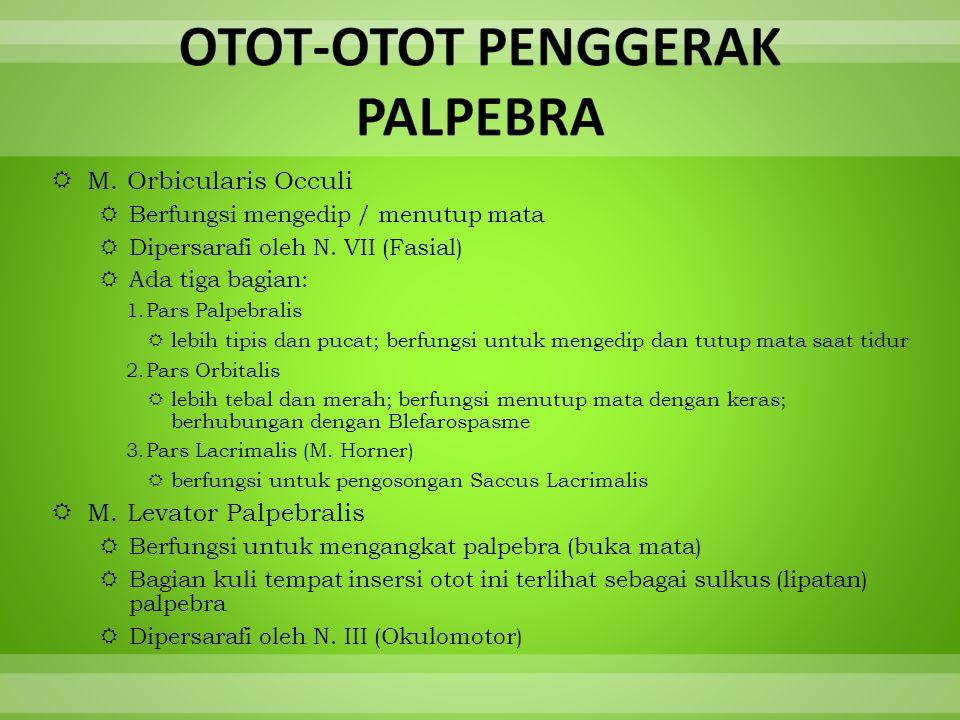 OTOT-OTOT PENGGERAK PALPEBRA