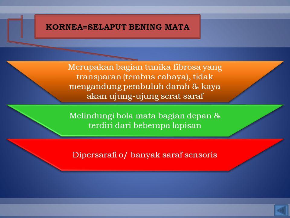 KORNEA=SELAPUT BENING MATA