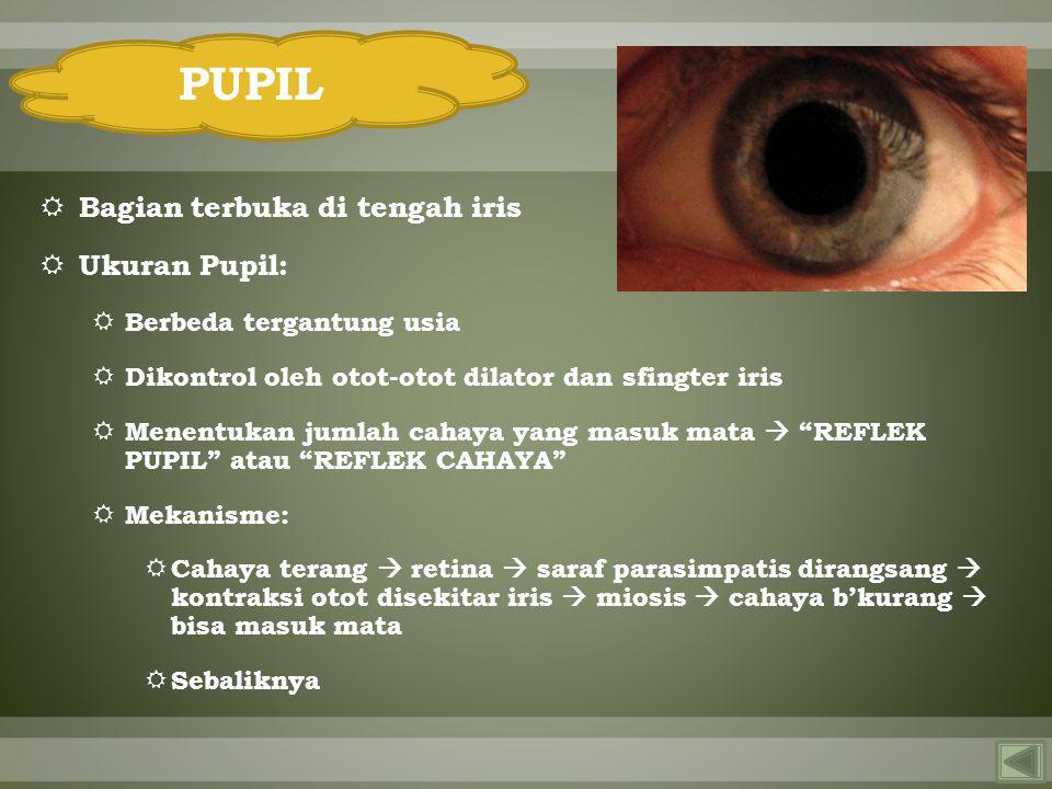 PUPIL Bagian terbuka di tengah iris Ukuran Pupil:
