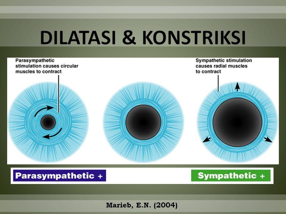 DILATASI & KONSTRIKSI Marieb, E.N. (2004)