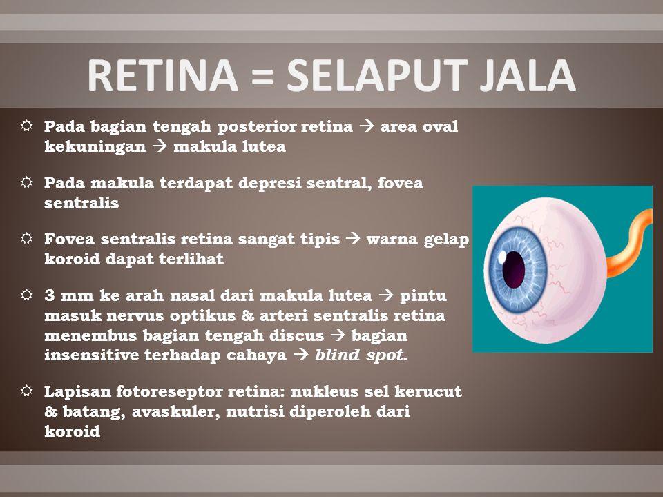 RETINA = SELAPUT JALA Pada bagian tengah posterior retina  area oval kekuningan  makula lutea.
