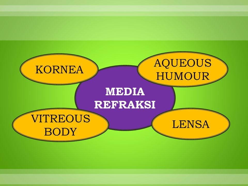 AQUEOUS HUMOUR KORNEA MEDIA REFRAKSI VITREOUS BODY LENSA