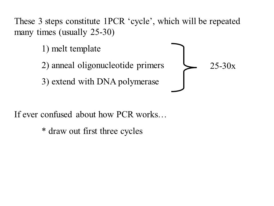 These 3 steps constitute 1PCR 'cycle', which will be repeated many times (usually 25-30)