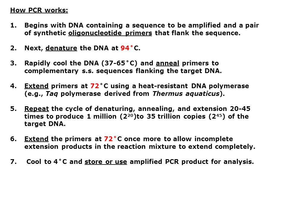How PCR works: Begins with DNA containing a sequence to be amplified and a pair of synthetic oligonucleotide primers that flank the sequence.