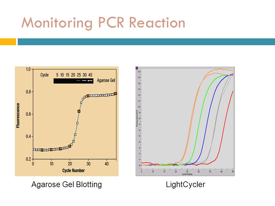 Monitoring PCR Reaction