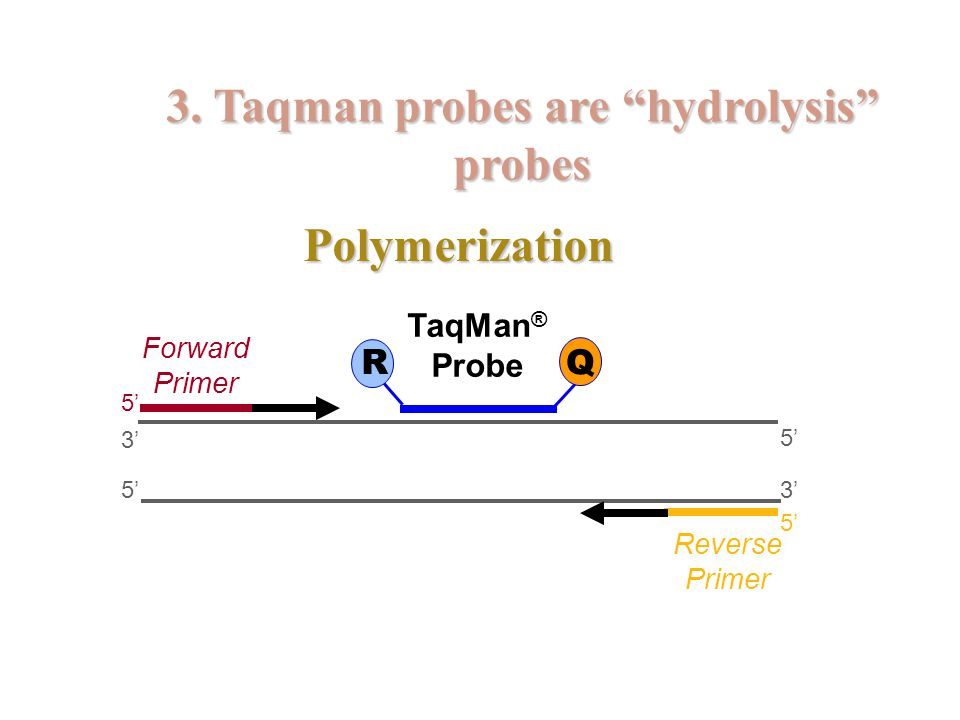 3. Taqman probes are hydrolysis probes