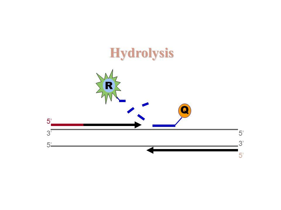 Hydrolysis R Q 5' 3' 5' 5' 3' 5'