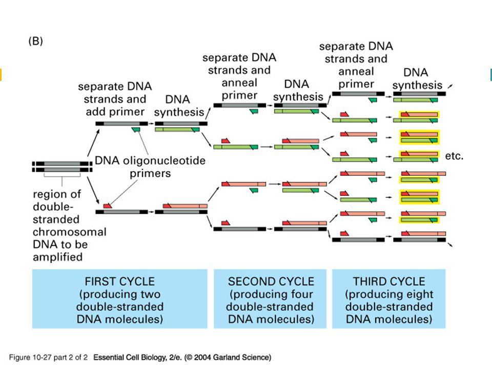 10_27_2_PCR_amplify.jpg 10_27_2_PCR_amplify.jpg
