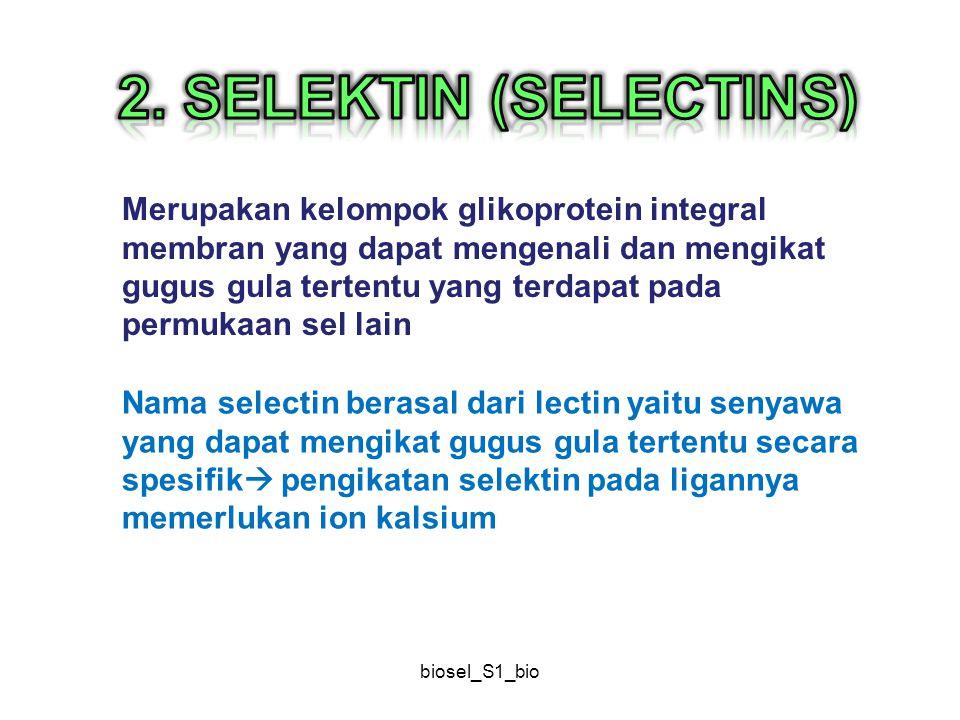 2. SELEKTIN (selectinS)