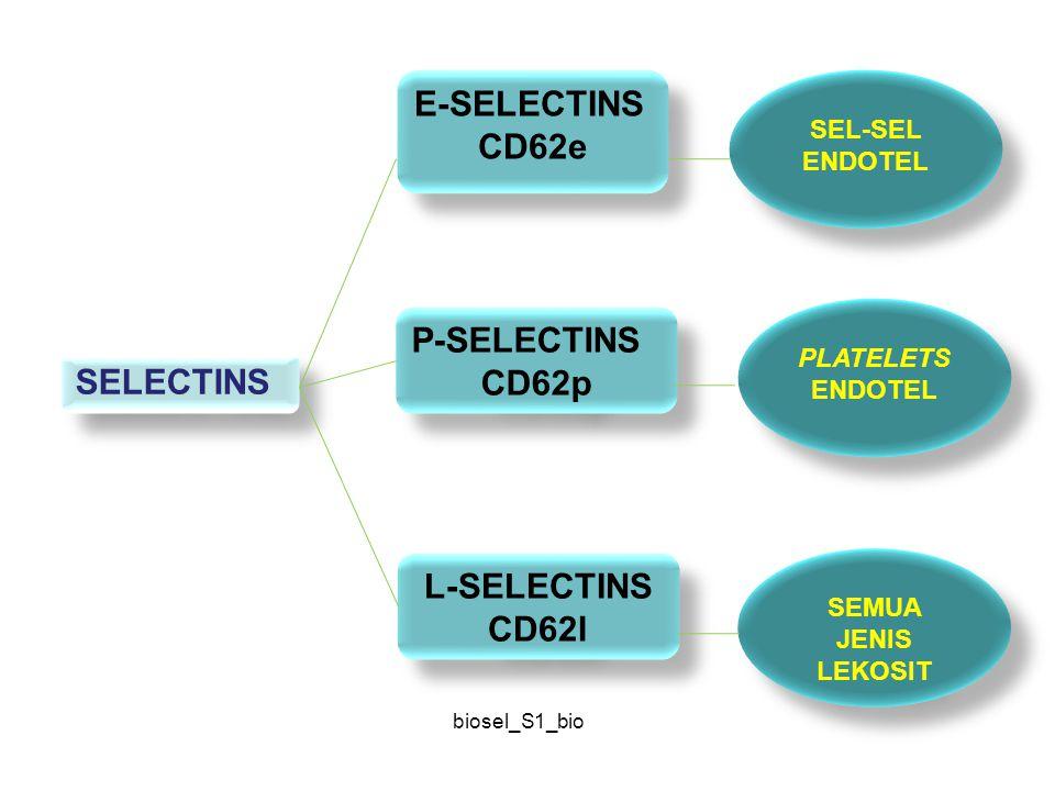 CD62e CD62p L-SELECTINS CD62l