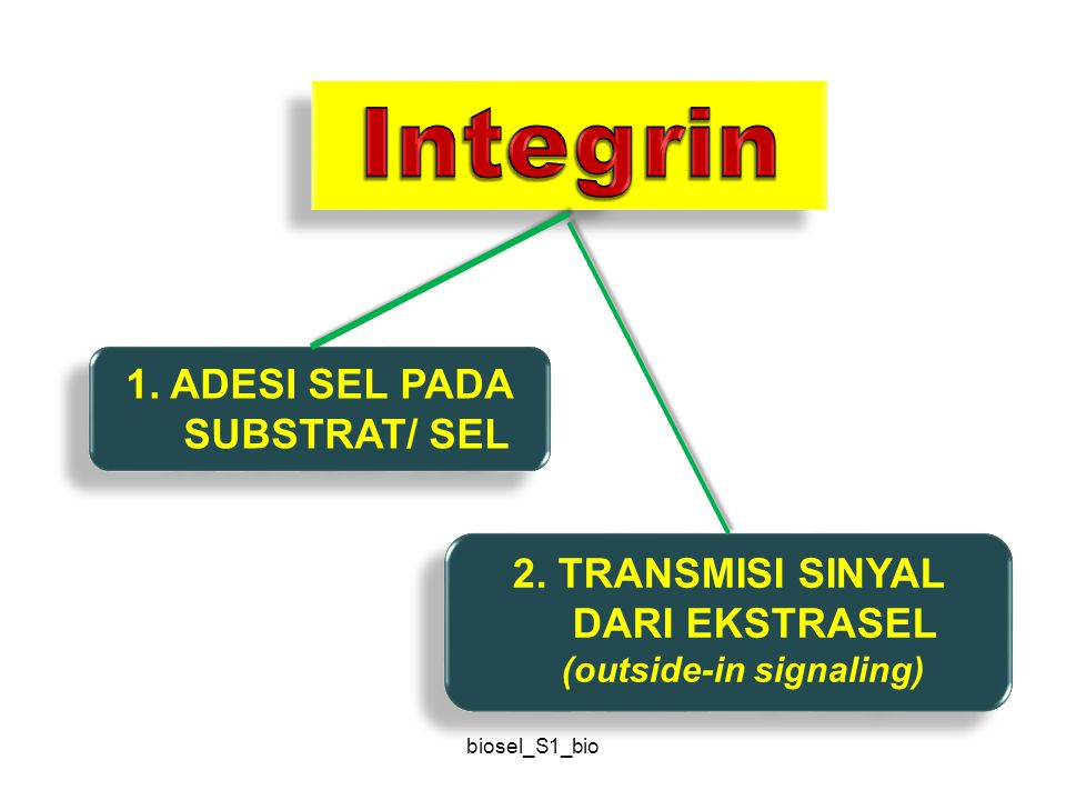 Integrin 1. ADESI SEL PADA SUBSTRAT/ SEL