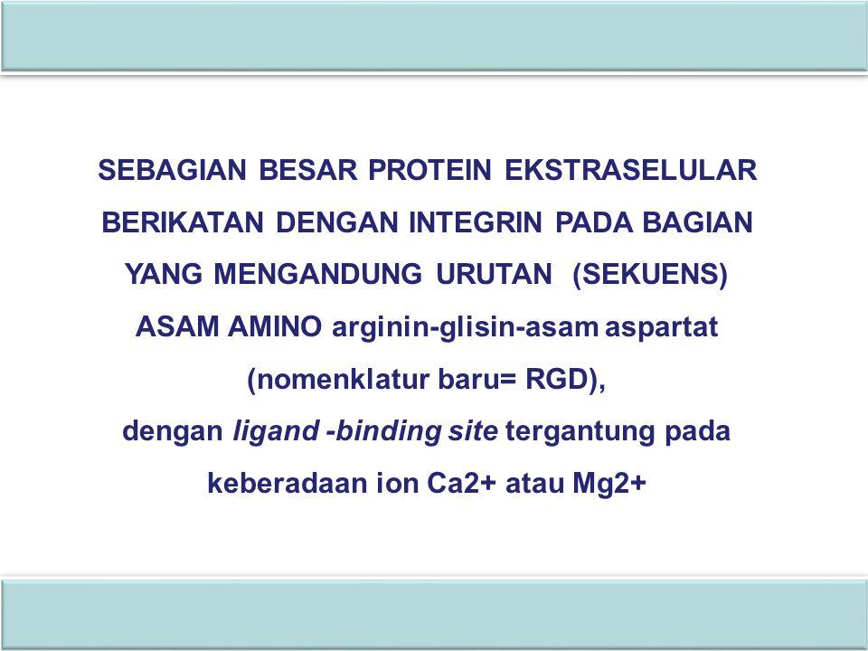 ASAM AMINO arginin-glisin-asam aspartat (nomenklatur baru= RGD),