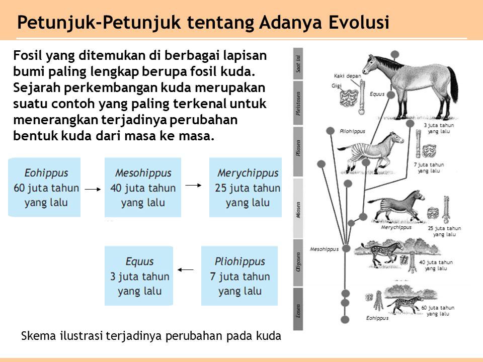 Petunjuk-Petunjuk tentang Adanya Evolusi