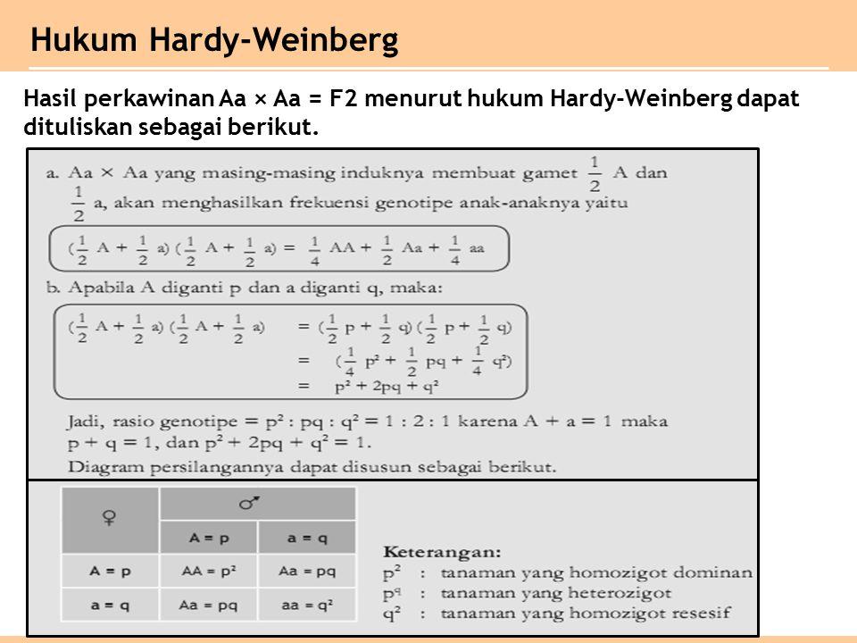 Hukum Hardy-Weinberg Hasil perkawinan Aa × Aa = F2 menurut hukum Hardy-Weinberg dapat dituliskan sebagai berikut.