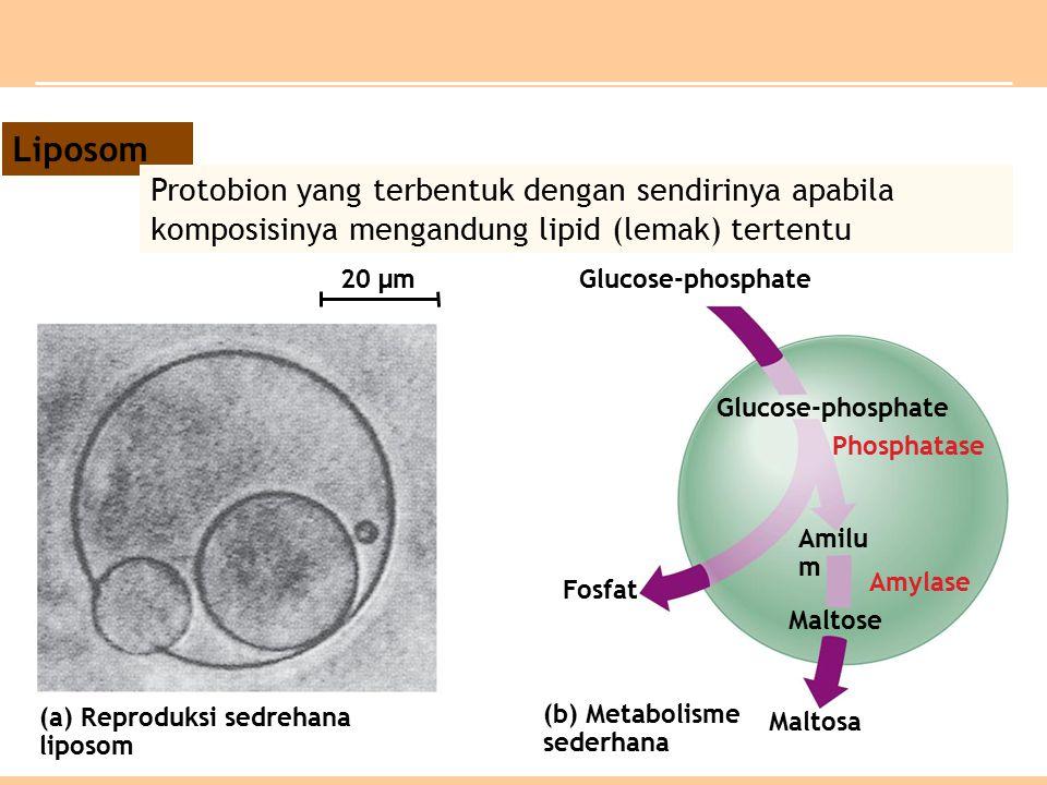 Liposom Protobion yang terbentuk dengan sendirinya apabila komposisinya mengandung lipid (lemak) tertentu.