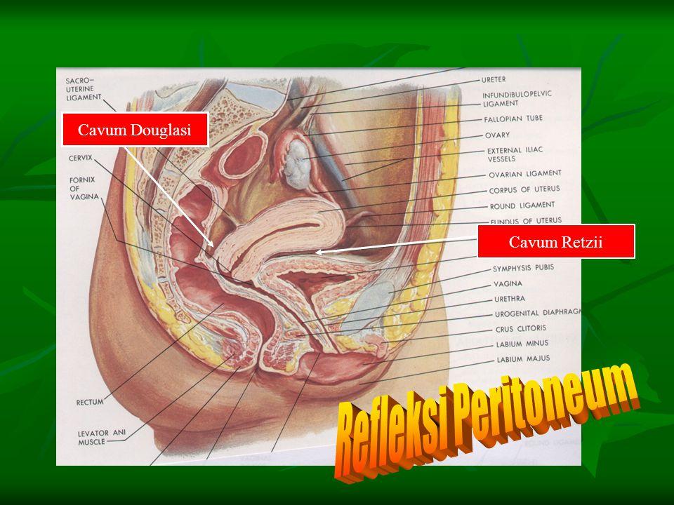 Cavum Douglasi Cavum Retzii Refleksi Peritoneum