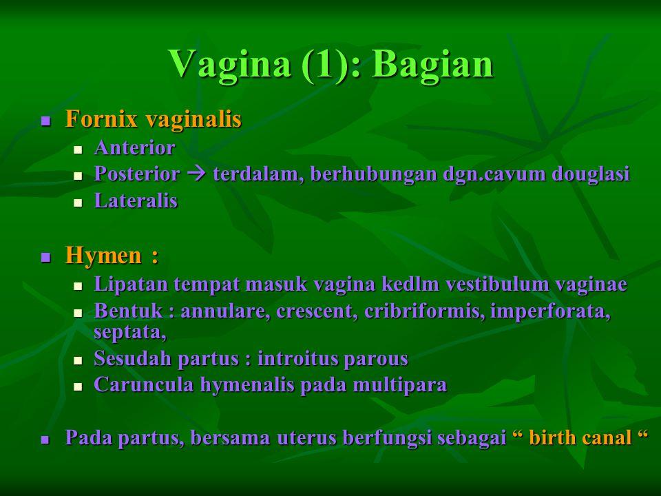 Vagina (1): Bagian Fornix vaginalis Hymen : Anterior