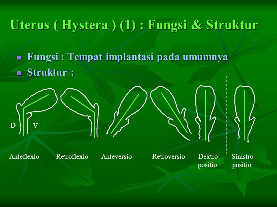 Uterus ( Hystera ) (1) : Fungsi & Struktur