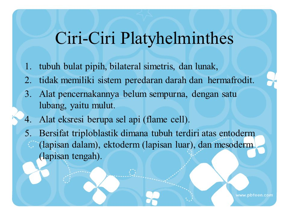 Ciri-Ciri Platyhelminthes
