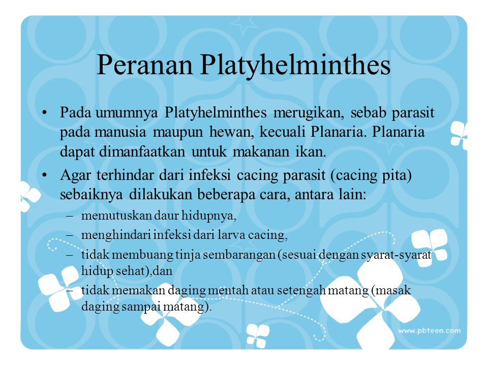 Peranan Platyhelminthes