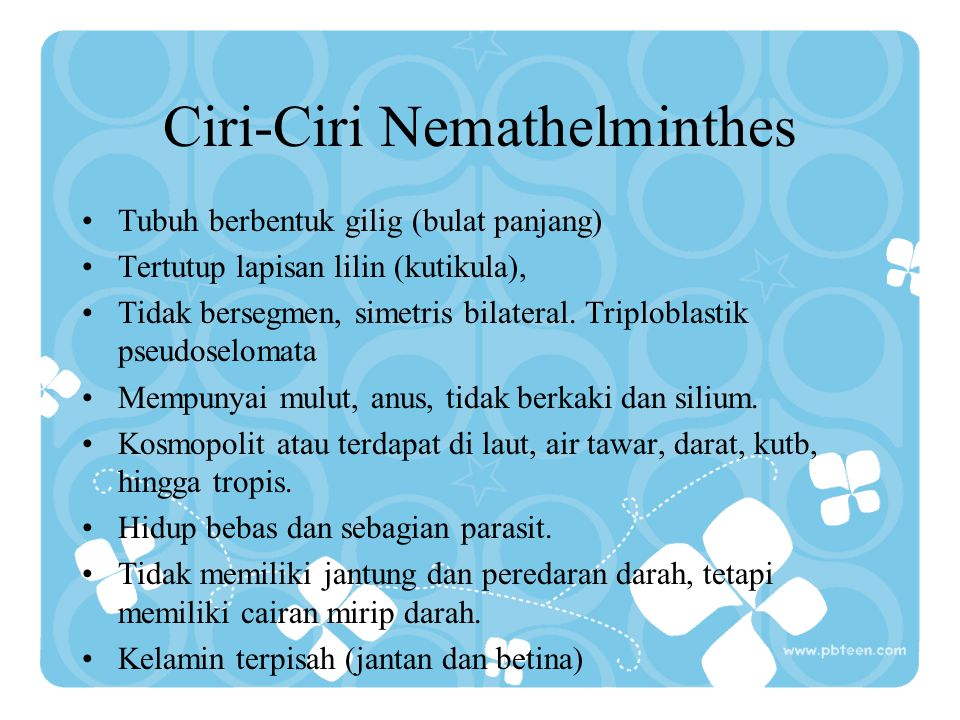 Ciri-Ciri Nemathelminthes