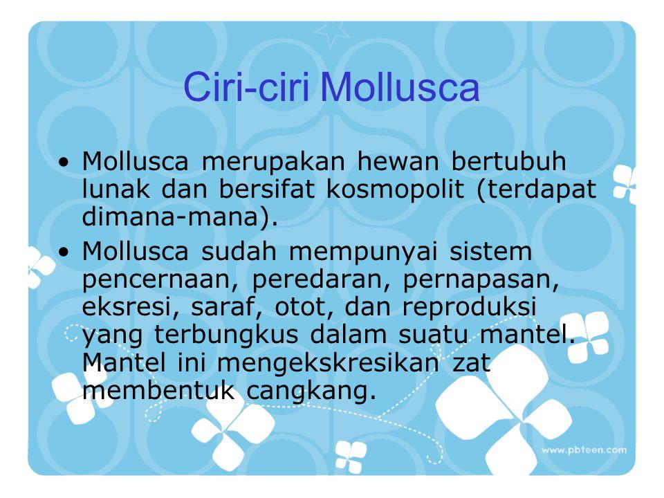 Ciri-ciri Mollusca Mollusca merupakan hewan bertubuh lunak dan bersifat kosmopolit (terdapat dimana-mana).