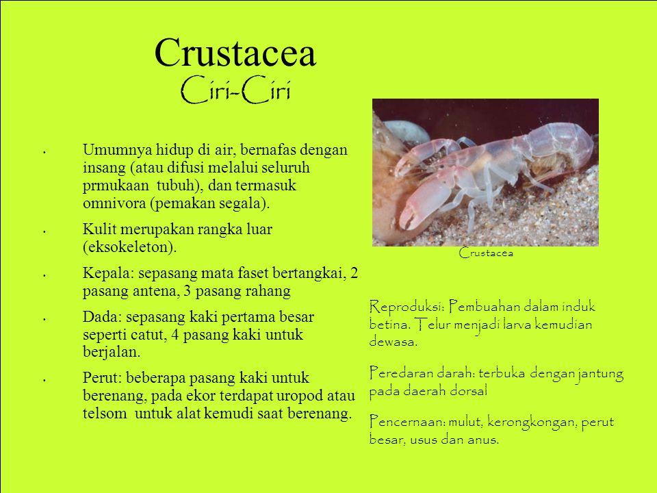Crustacea Ciri-Ciri Ciri-Ciri