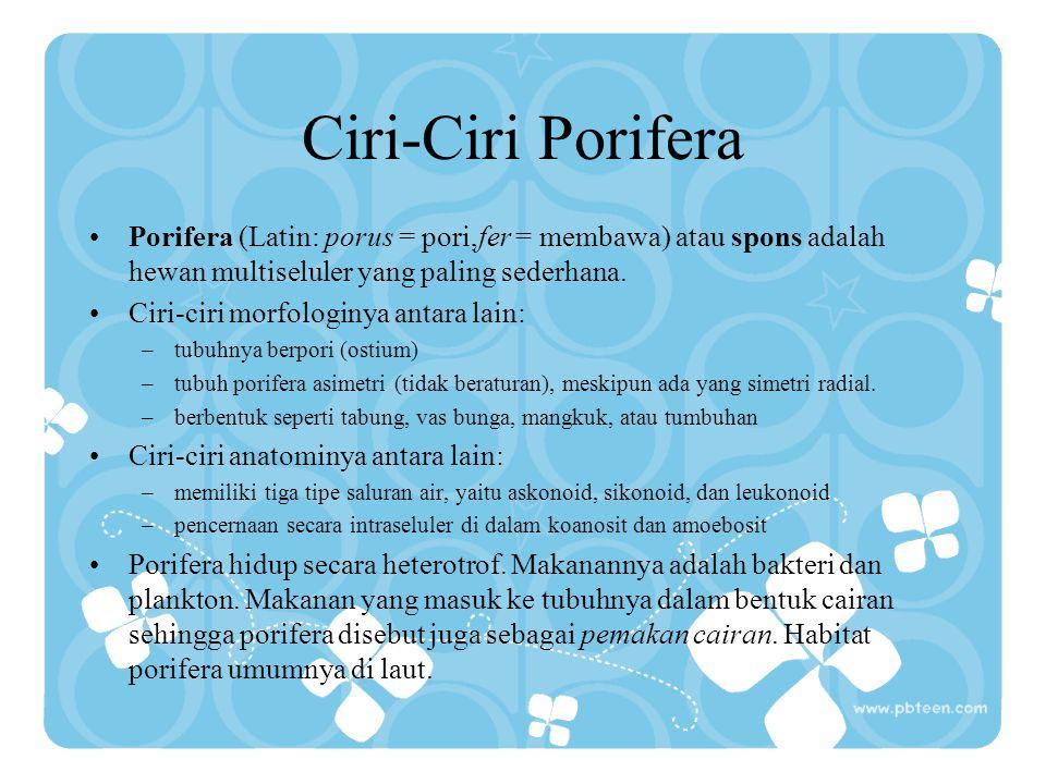 Ciri-Ciri Porifera Porifera (Latin: porus = pori,fer = membawa) atau spons adalah hewan multiseluler yang paling sederhana.