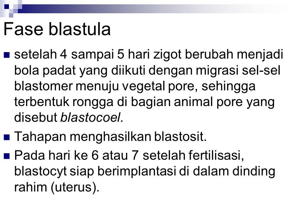 Fase blastula