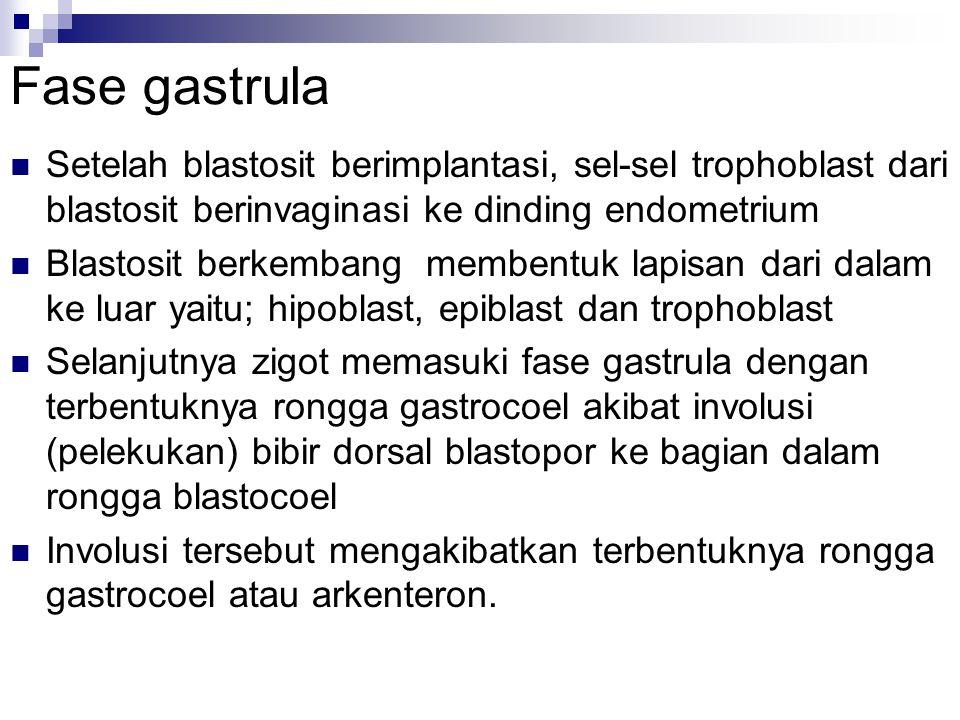 Fase gastrula Setelah blastosit berimplantasi, sel-sel trophoblast dari blastosit berinvaginasi ke dinding endometrium.