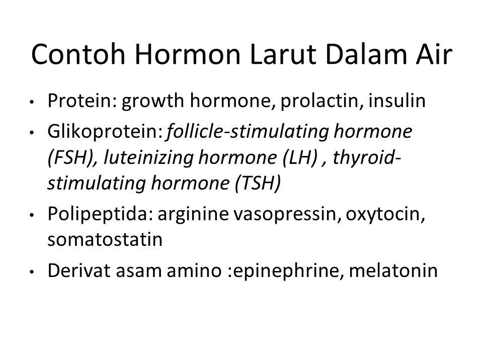 Contoh Hormon Larut Dalam Air