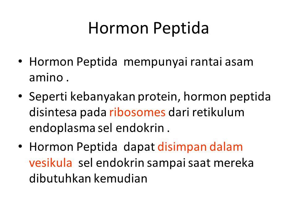 Hormon Peptida Hormon Peptida mempunyai rantai asam amino .