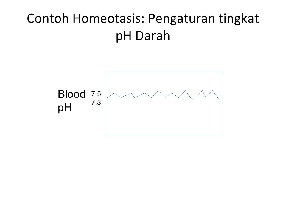 Contoh Homeotasis: Pengaturan tingkat pH Darah