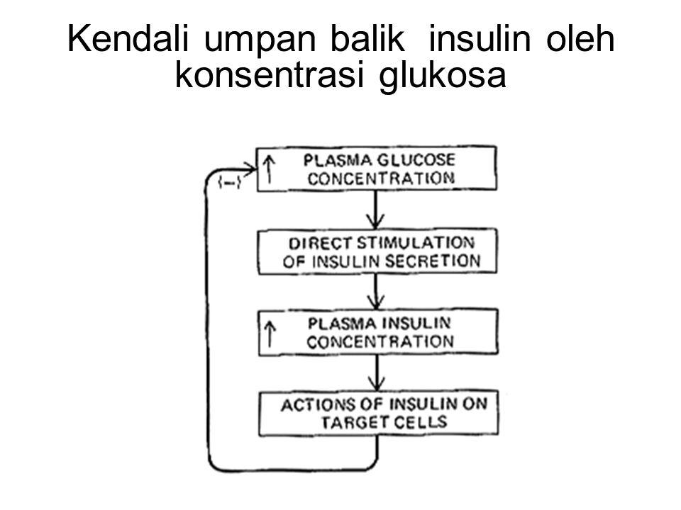 Kendali umpan balik insulin oleh konsentrasi glukosa