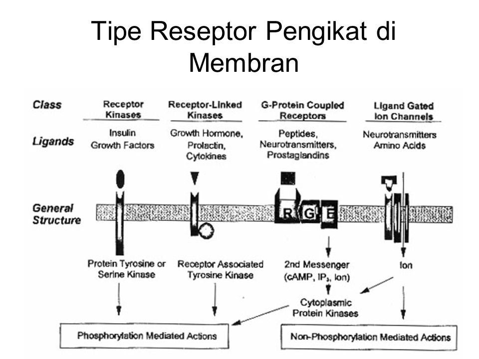 Tipe Reseptor Pengikat di Membran