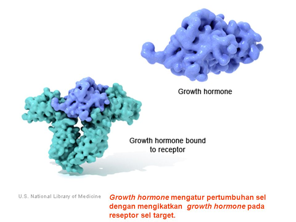 This particular receptor is activated when growth hormone binds to it