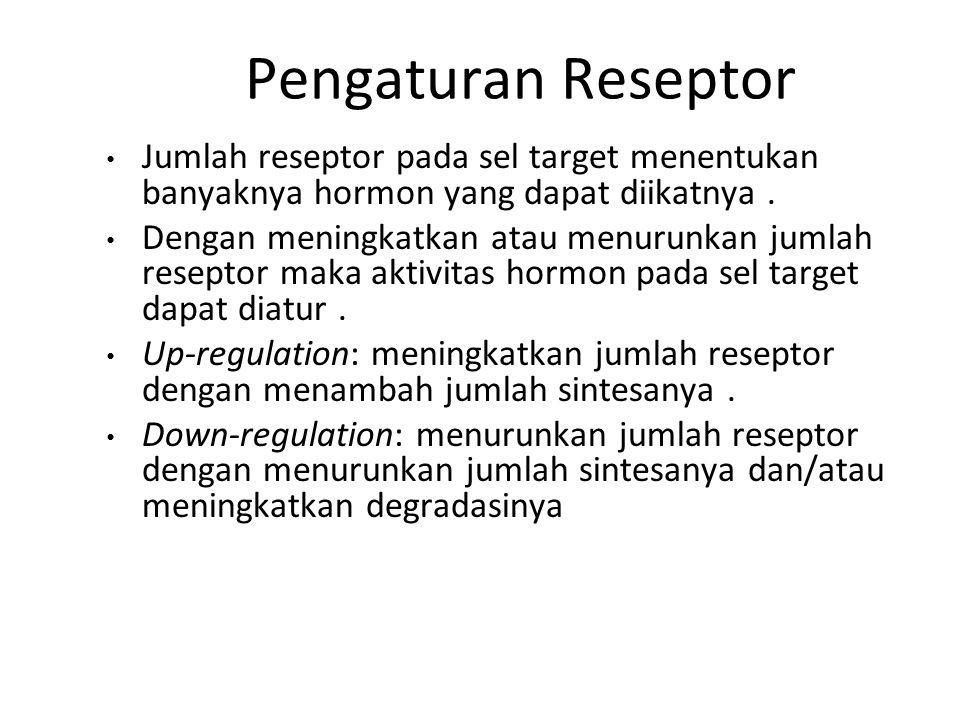 Pengaturan Reseptor Jumlah reseptor pada sel target menentukan banyaknya hormon yang dapat diikatnya .