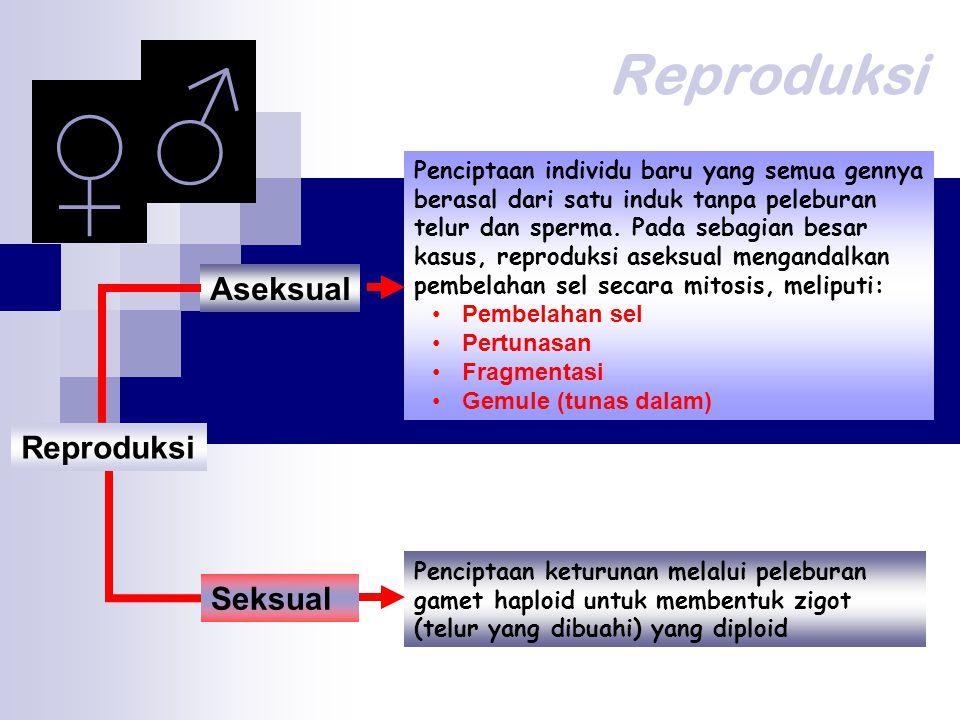 ♂ ♀ Reproduksi Aseksual Reproduksi Seksual