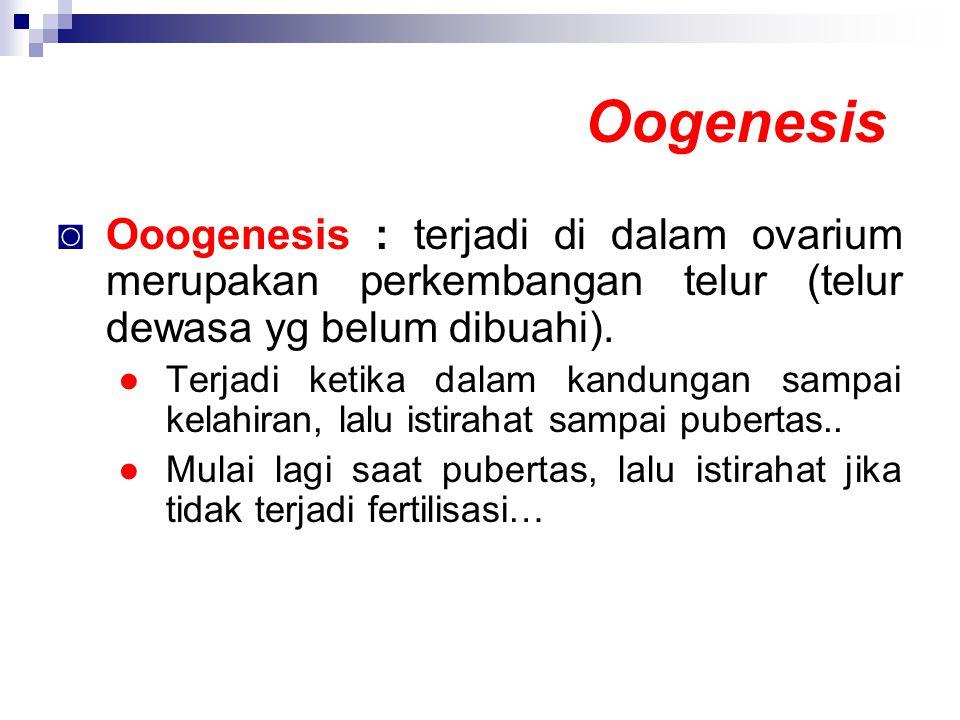 Oogenesis Ooogenesis : terjadi di dalam ovarium merupakan perkembangan telur (telur dewasa yg belum dibuahi).