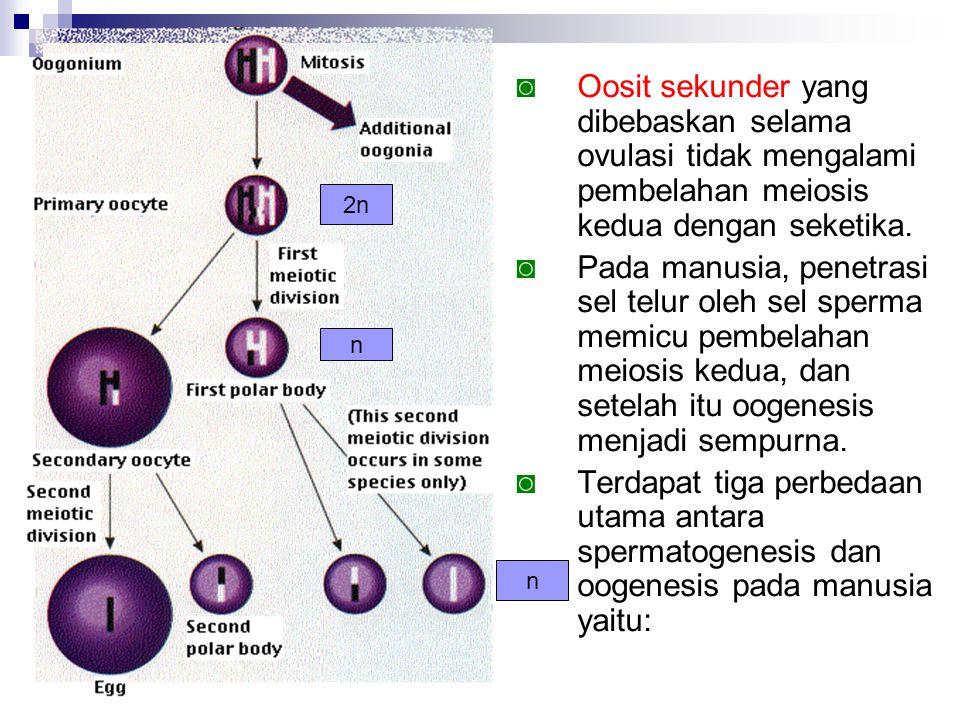 Oosit sekunder yang dibebaskan selama ovulasi tidak mengalami pembelahan meiosis kedua dengan seketika.